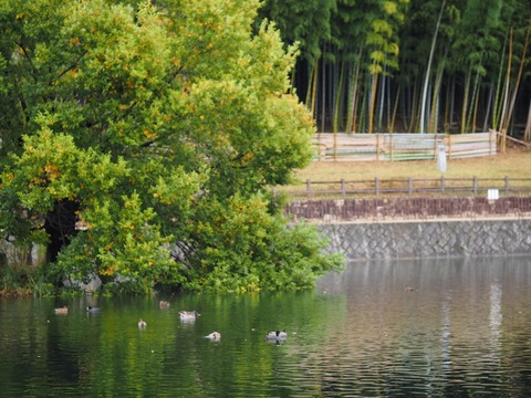 桃山公園 (59) (1024x768)