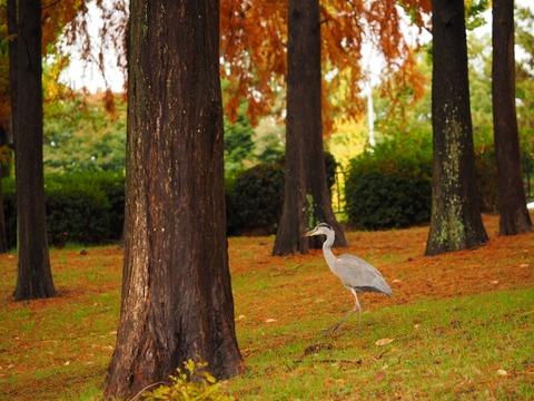 桃山公園 (21) (1024x768)