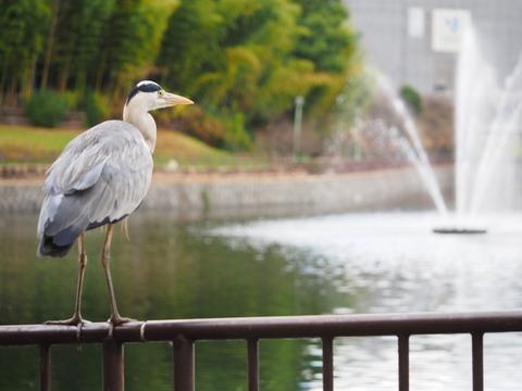 桃山公園 (49) (1024x768)