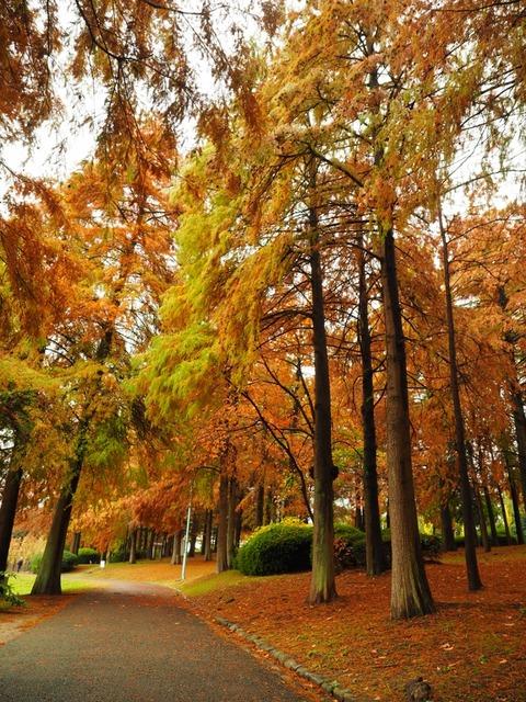 桃山公園 (16) (1024x768)