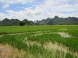 タイの田園