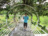 草木のトンネル