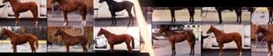 パドックで手に入らない馬体の見方