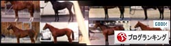競馬ブログランキング馬体一刀流