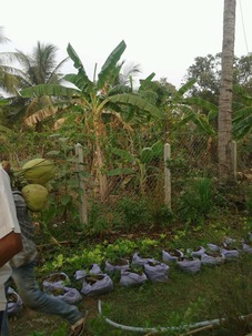small scale farming at office
