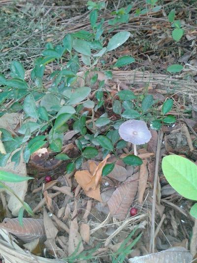 Mushroom at lime