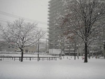 120229大雪 (3)