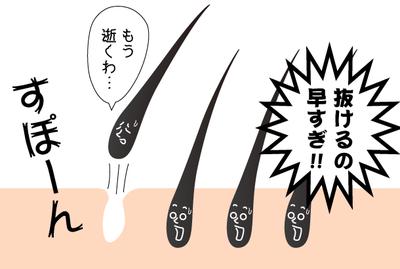 hayasugi