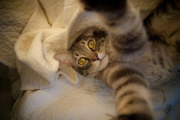 La-foto-de-este-gato-descansando-600x400
