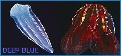 深海にて煌きの生物
