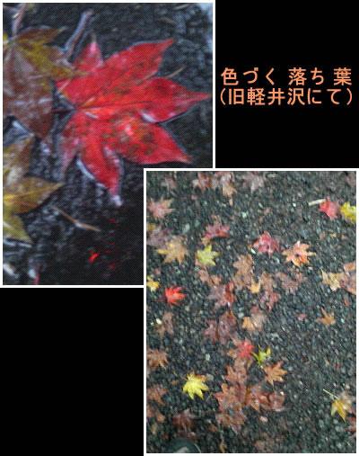 雨に濡れる紅葉