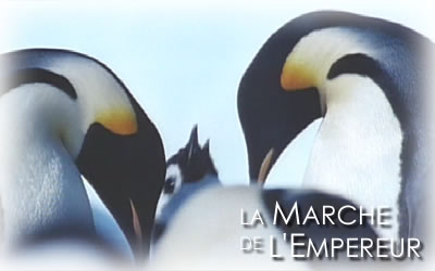 皇帝ペンギン親子の風景
