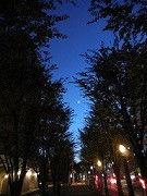 $☆横浜ベイコール☆-小田さん クリスマス2