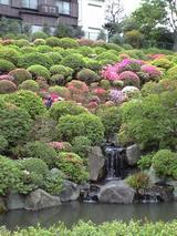 東京根津神社つつじ祭り200801