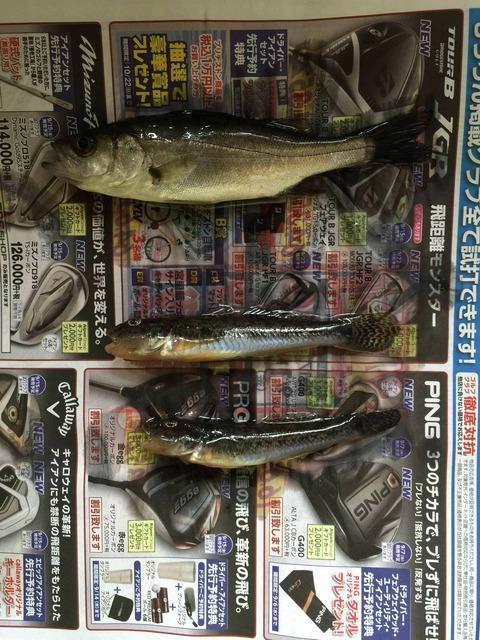 愛知県の釣り場で打線組んだ