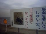 伊勢湾内にもカメの産卵場