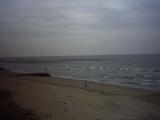 今年も海苔網が立ちました