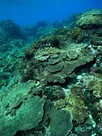 八丈サンゴ礁