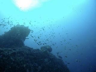 お魚いっぱい海の中
