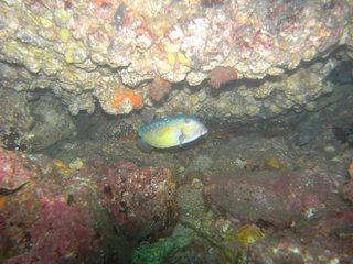 ハコフグ 9.28熱海
