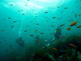 ダイビングお魚いっぱい