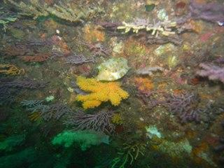 シマウミスズメ 9.28熱海