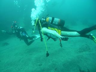 海洋実習 11.16真鶴