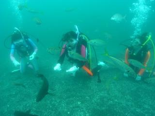 海洋実習で魚いっぱい