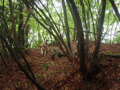 森を走るビィ