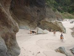 こんな素敵なビーチが