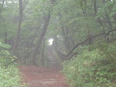 すてきな小道