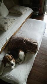 3匹のベッド