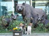 熊に会えるかな