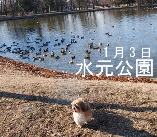 べべの水元公園お正月
