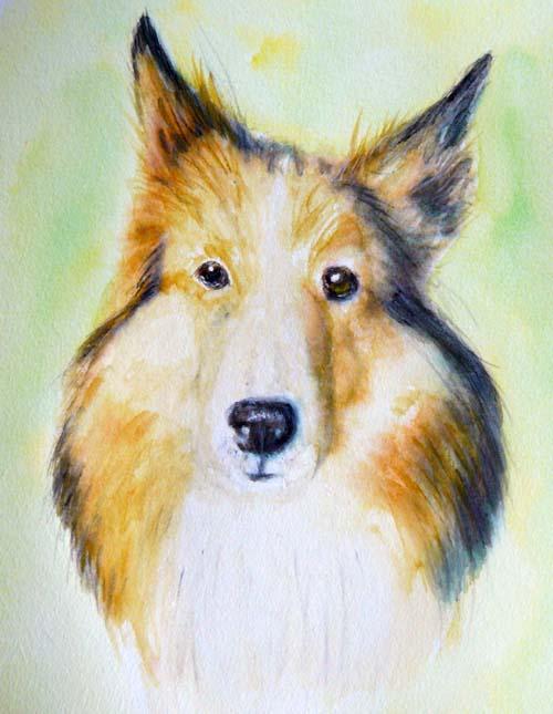 コリー犬ラッキーの水彩画