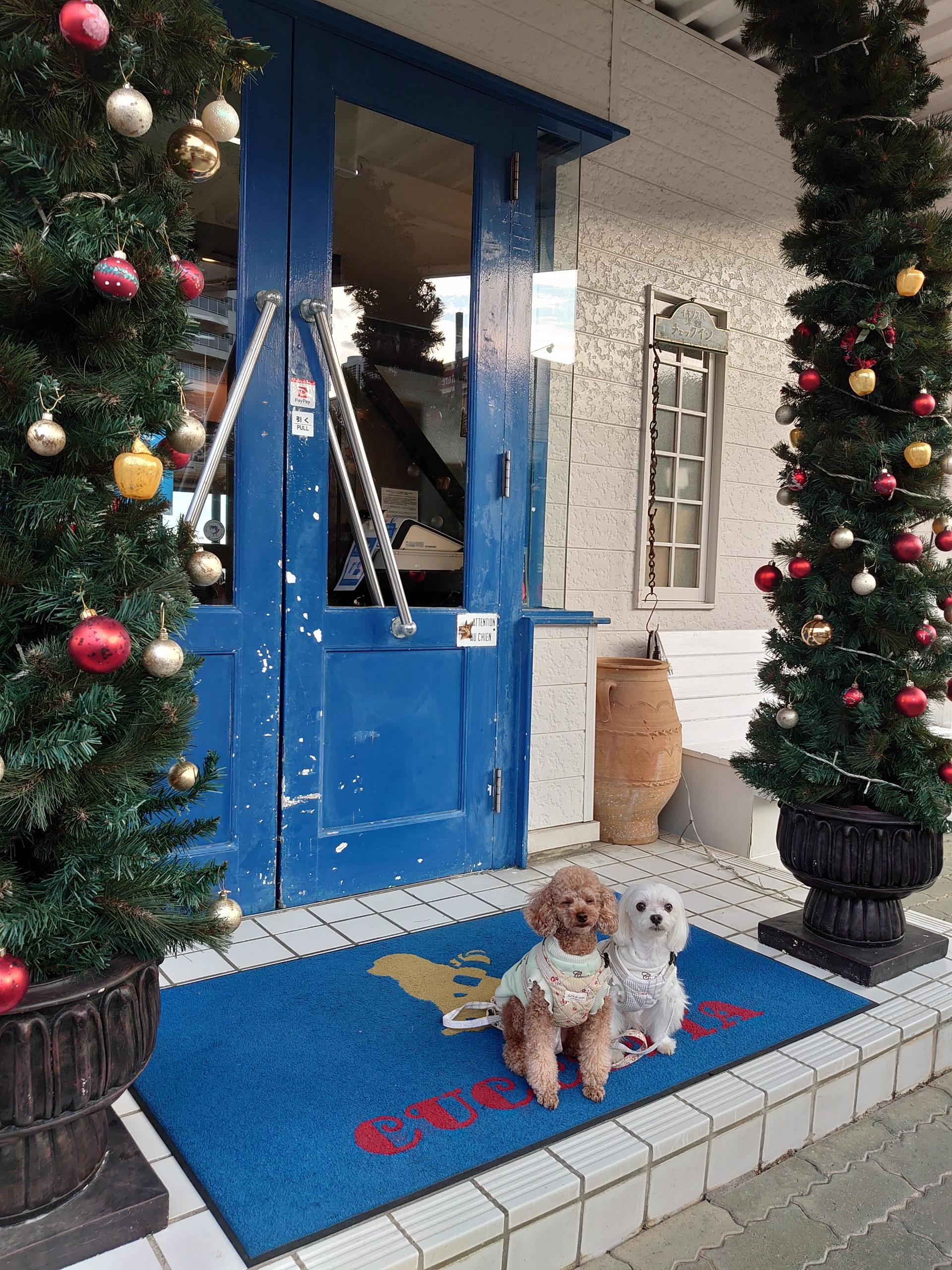市 保護 犬 浜松