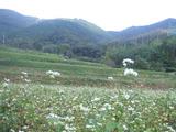 秦野の風景