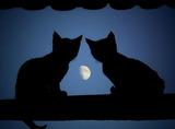 ネコ2匹 月夜