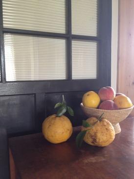 夏蜜柑と桃