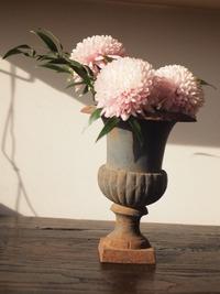 アンティークと菊