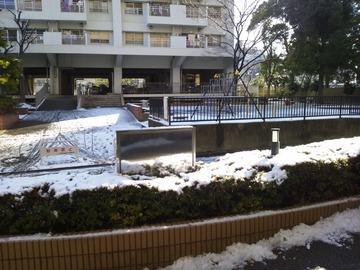雪積もってる!