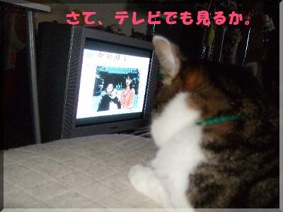 テレビっすか