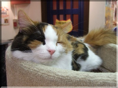 美猫ちゃん☆