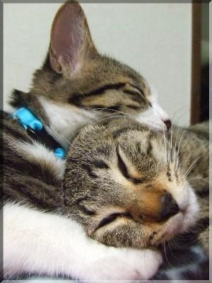 マニの専用、モナ顎枕。