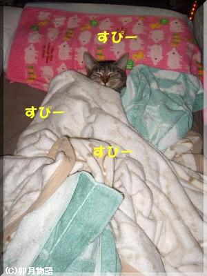一人でベッドを占領なモナさん。