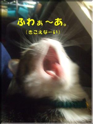 あくびで・・・・