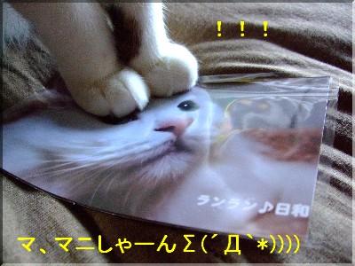 ラン君が・・・Σ(´Д`*))))