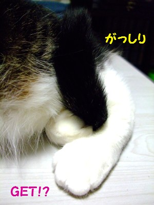 2009_0331(004)