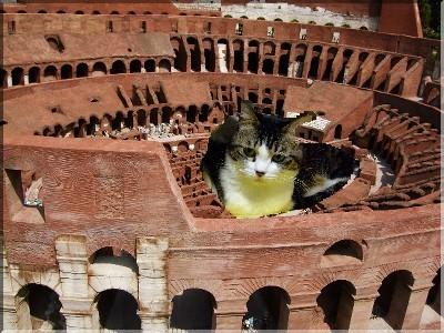 コロッセオで休憩中?