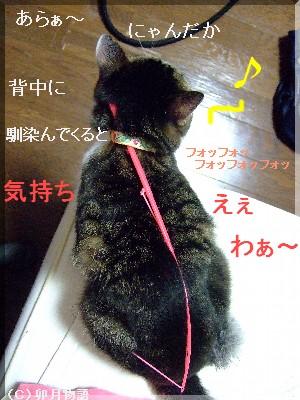 猫背矯正中2
